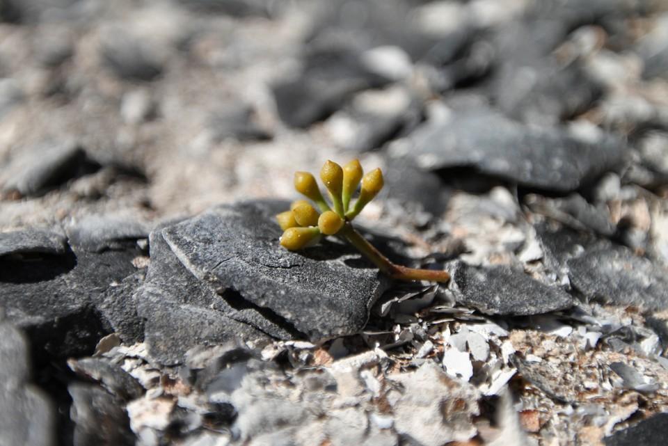 fallen seed